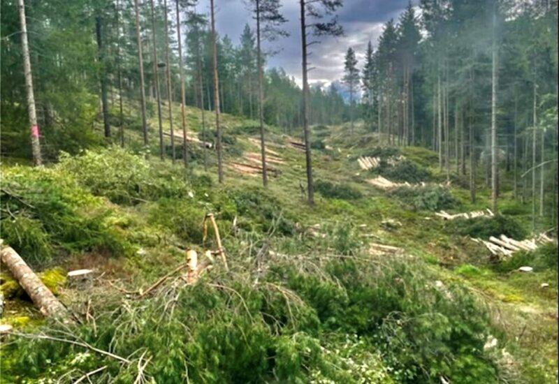 Hån skog juli 2021